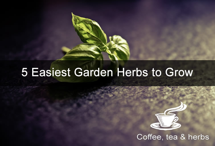 5 Easiest Garden Herbs to Grow